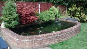 Wildlife Pond Essex